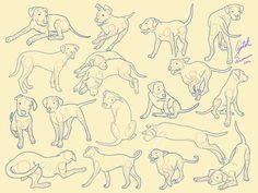 some sketches on my pups for practice, feel free to use them as reference points and i have pics of all the movements if you need the actual picture PUPPY REFERENCE Animal Sketches, Animal Drawings, Drawing Sketches, Art Drawings, Dog Sketches, Dog Line Art, Dog Art, Animation Reference, Drawing Reference Poses
