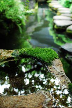 concrete. water. moss.