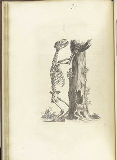 Beautiful Drawings Of Bones From William Cheseldens Osteographia  Lazer Horse