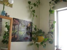 Arundina Graminifolia D Don Hochr Bull