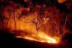 In pictures: Australia wildfire reaches 'catastrophe' level Australia Travel, Western Australia, Sydney Australia, Bushfires In Australia, Australian Bush, Australian Homes, Australia Tattoo, Lost Paradise, Japanese Travel