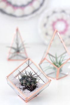 DIY Copper and Glass Terrarium