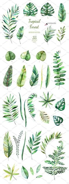 Tropical Forest. by Kate_Rina on @creativemarket