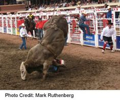 Bragg Creek, Trans Canada Highway, Alberta Travel, Bull Riding, Calgary, Photo Credit