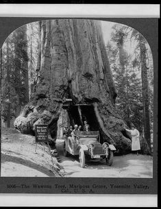 Visitors drive through a tunnel carved in a giant sequoia tree in Mariposa Grove, Yosemite National Park, in 1918. Copyright by the Keystone View Company. Library of Congress Prints and Photographs Division.