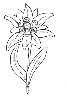Edelweiss Printable Adult Coloring pages. hundreds of flowers Edelweiss Tattoo, Broderie Simple, Alpine Flowers, Printable Adult Coloring Pages, Flower Coloring Pages, Flower Template, Flower Tattoos, Flower Power, Embroidery Patterns
