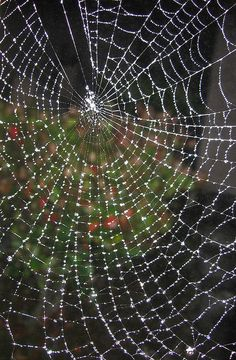 Spider web...oh where oh where is Charlotte??