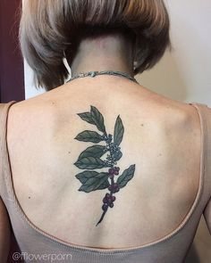 "Olga Nekrasova (@fflowerporn) on Instagram: ""Half year healed coffee plant for Julia #tattoo #botanicaltattoo #flowertattoo #coffeeplant"""