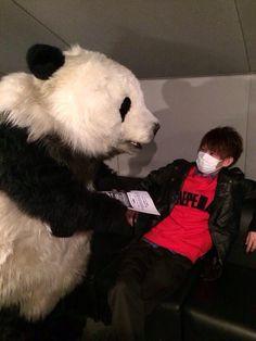 Panda Bear, Poses, My Love, Funny, Animals, Figure Poses, Animales, Animaux, Panda