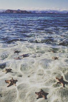 salty stars