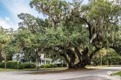 The Lover's Oak Brunswick Georgia  The Lover's Oak (said to date back to the 12th century) is located at the intersection of Albany and Prince Streets in Historic Downtown Brunswick. According to local legend Native American braves and their maidens met under the majestic spreading limbs of this enormous oak. As of 2005 the Lovers Oak was estimated to be 900 years old. The trees trunk is about 13 feet in diameter and it branches into ten limbs measuring 12 to 30 inches in diameter…