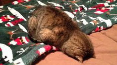 20 Cats That Are Simply Too Tired To Function - RantPets - http://www.rantpets.com/2015/09/10/15-cats-that-are-simply-too-tired-to-function/