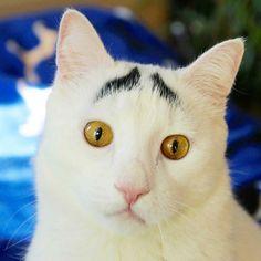 @samhaseyebrows #catstocker  #cat #cats #kitten #kittens #kitty #猫 #小猫 #子猫 #고양이 #katze #kätzchen #chat #chaton #gato #gatito #gatto #gattino #neko #кошка #кошки #котенок #котята #кот #коты #котики #kedi #kedicik #meow #mycat by catstocker