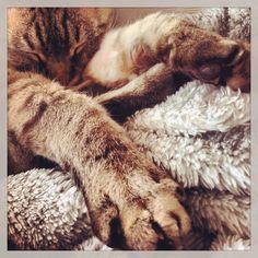#devonrex #cat