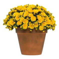Shade Flowers that Will Make You Forget the Lack of Sun Hosta Plants, Houseplants, Shade Plants, Garden Plants, Shade Flowers, Pink Flowers, Potted Mums, Globe Flower, Spring Flowering Bulbs