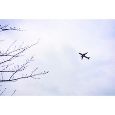 【nazuna0723】さんのInstagramをピンしています。 《#冬 #曇り空 #飛行機 #桜の木 #桜 #冬の空 #冷たい空気 #空 #成田 #成田空港 #さくらの山公園 #日本 #airplane #lovers_nippon #japan_daytime_view #pics_jp #icu_japan #fujifilmxt10 #fujifilm #team_jp_ #team_jp_東 #bestjapanpics #japan_views #pkt_japan #ig_japan #igers #igersjp #japanforcus #japan  あと数ヶ月後には満開の桜と旅立つ飛行機。》