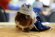 Popular Items for Guinea Pig Clothes - Pets & Home Decor Guinea Pig Costumes, Guinea Pig Clothes, Pet Costumes, Baby Guinea Pigs, Guinea Pig Care, Chinchillas, Hamsters, Pet Rodents, Animals And Pets