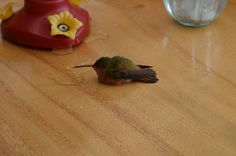 He Found A Dazed Hummingbird About To Be Eaten. What Happened Next Is AWESOME.