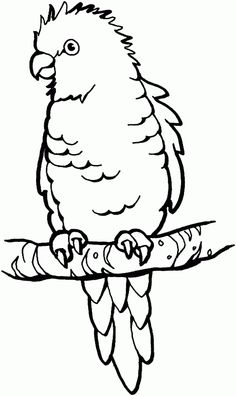 Parrot bird - Free Printable Coloring Pages