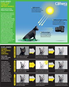 Camera metering and exposure explained: free photography cheat sheets - Digital Camera World