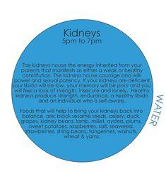 TCM - 24-hour Organ Qi Cycle kidneys