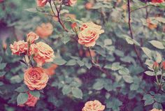 tumblr pink flowers - Google Search