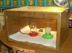 chicken brooder box | My chicks love their brooder box! My brother-in-law made it out of an ...