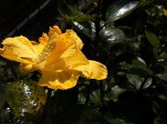 El amarillo..