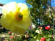 #Yellow #Beautiful #Flower Photo By MYSELF