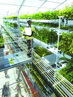 Superfarm Prospective research studies on urban farming An intensive market gardening greenhouse associated with a supermarket SOA Architects, France hydroponicgardening is part of Greenhouse farming - What Is Greenhouse, Greenhouse Farming, Indoor Farming, Hydroponic Farming, Greenhouse Plans, Hydroponics System, Simple Greenhouse, Backyard Greenhouse, Backyard Chickens