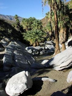 Palm Desert- Hike Agua Caliente Indian Canyons.  I hiked this place after dropping Kent off at a golf course.  Amazing, tranquil scenery. Only talk of rattlesnakes in the canyon above.