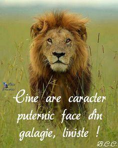 Lion - Masai Mara, Kenya by brianscott_photography Aslan Beautiful Cats, Animals Beautiful, Beautiful Creatures, Animals And Pets, Cute Animals, Lion Photography, Lion And Lioness, Leo Lion, Carnivore