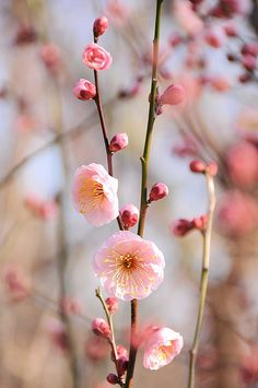 Spring inspiration!