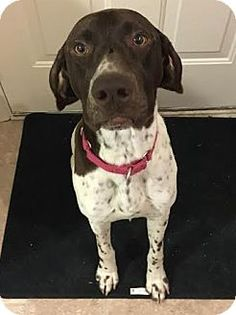 Dogs To Adopt Fargo Nd