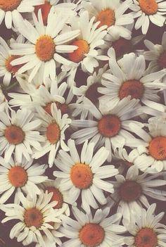 #flowers #summer #hipster