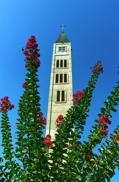 Tower of the Franciscan monastery of Saint Luke in Mostar and flowers by day, Bosnia and Herzegovina Mostar Bosnia, Famous Places, Bosnia And Herzegovina, Travel Photos, Fine Art America, Saints, Tower, Building, Travel Pictures