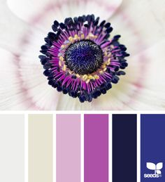 Color Flora via @designseeds