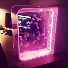 Moon jellyfish in Pulse 80 Jellyfish Tank with pink LED lights Moon j.