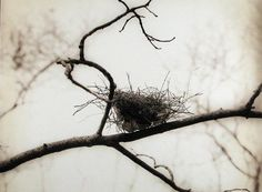 bird nests in winter branches - Google Search