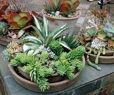 Succulent #Container #Garden Plans