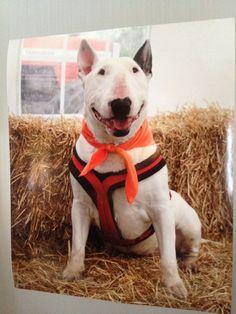 Very happy looking sweet dog