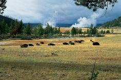 How to Get to 12 National Parks from Salt Lake City, UT: Yellowstone National Park