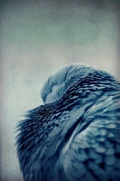 shades of blue bird feathers Foto Art, Beautiful Birds, Beautiful Things, My Favorite Color, Blue Bird, Shades Of Blue, Eagles, Color Inspiration, Inspiration Boards