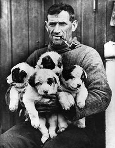 """Thomas Crean, the """"Irish Giant,"""" holding sled dog puppies for the Endurance Expedition.   7 February 1915"""