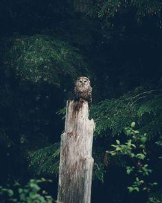Forest Creatures, Wild Creatures, Wildlife Photography, Animal Photography, Hunting Photography, Nature Animals, Beautiful Creatures, Animal Kingdom, Bald Eagle