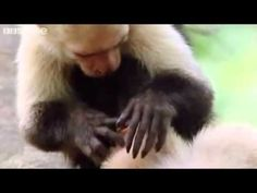 This cracked me up when I saw it a couple of years ago, dubbed animal clips from the best of the BBC.