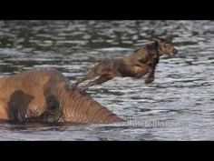 Elephant and Dog BFFs Are the Cutest (and Trendiest) Interspecies Friendships on the Internet