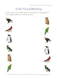 printable birds picture matching