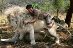 colors of the lions eyes - Google Search