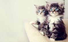 These are cute kitties.  Repin them. You know you want to just like I did.  You know that your friends will so badly want to as well!